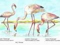 flamingoes_2